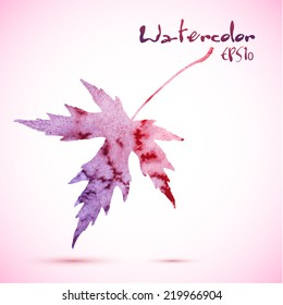 Red violet watercolor elegant painted vector winter maple leaf.
