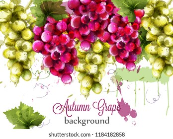 Red and white grapes Autumnal watercolor card Vector. Painted splash style templates