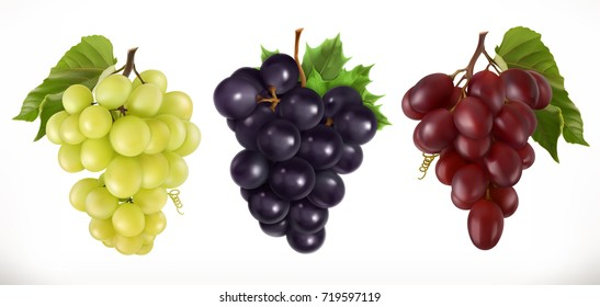 Red and white table grapes, wine grapes. Fresh fruit, 3d vector icon set