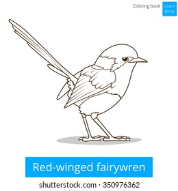 Red Winged Fairywren Bird Learn Birds Educational Game Coloring Book Vector Illustration