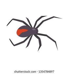 Redback spider, black widow. Latrodectus hasselti. Isolated vector illustration