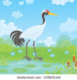 Red-crowned crane bird by a small lake among cane, grass and flowers of a meadow on a summer day, vector illustration in a cartoon style