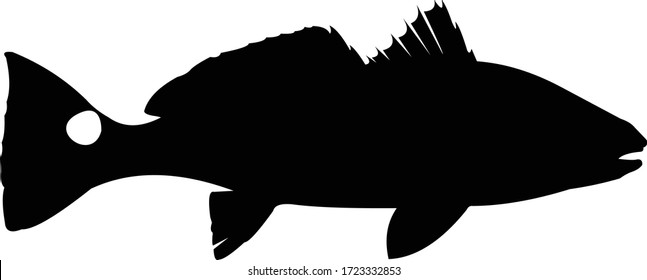 Reddrum Logo. Great Red drum fishing vector to use as your fishing activity.