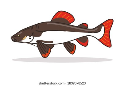 Redtail catfish design Illustration vector art