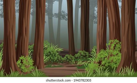 Redwood forest vector landscape with fog