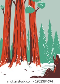 Redwood National and State Park During Winter with Coastal Redwoods Located Northern California WPA Poster Art