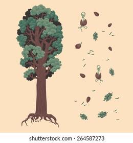 Redwood and seeds. Hand drawn vector illustration. Ukraine