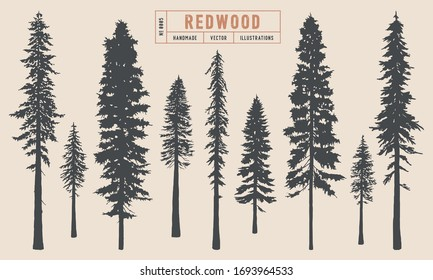 Redwood tree silhouette vector illustration hand drawn