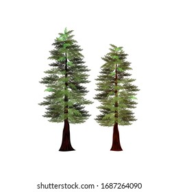 redwood tree, the tallest trees in the world, vector illustration.