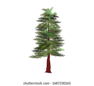 redwood tree vector illustration, the tallest tree in the world. Sequoiadendron giganteum plant logo.