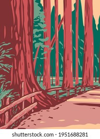 Redwoods in the Avenue of the Giants Surrounded by the Humboldt Redwoods State Park Located in Arcata California WPA Poster Art