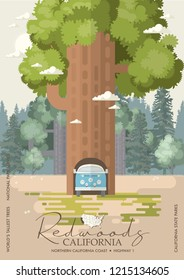 Redwoods park in California vector colorful poster. State parks. World's tallest trees.