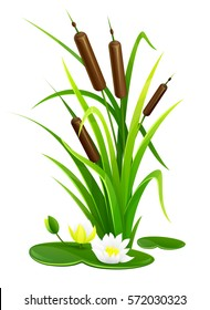 Reed bush thicket plant with green leaves and water lily flowers vector illustration. Isolated white background