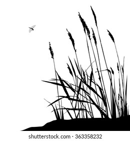 Reed and flying dragonfly during sunny day - vector illustration, black and white. Wild live