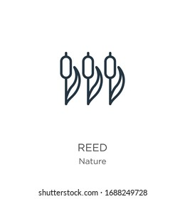 Reed icon. Thin linear reed outline icon isolated on white background from nature collection. Line vector sign, symbol for web and mobile