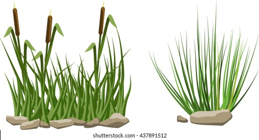 Reeds in grass and stones isolated on white background