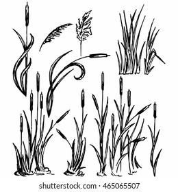 Reeds. Marsh grass. Vector Image
