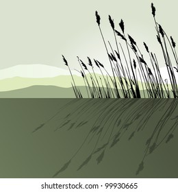 Reeds in the water  - vector