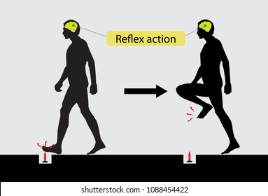 Reflex action of human body, Nervous System