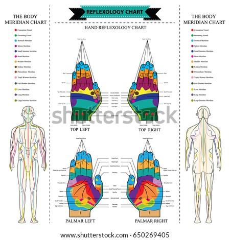 Reflexology Chart Body Anatomy Head Toe Stock Vector Royalty Free