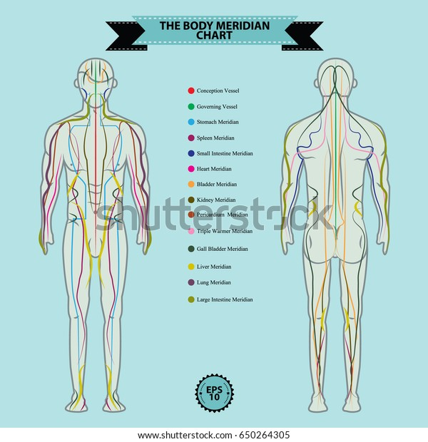 Reflexology Chart Body Anatomy Head Toe Stock Vector