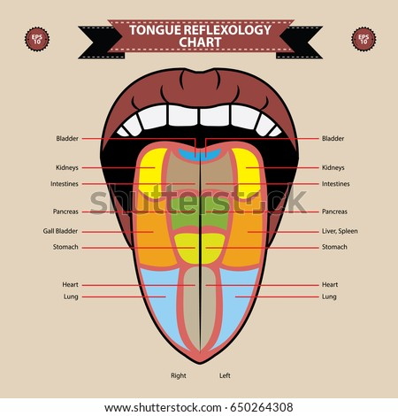 Diagram Function Under The Tongue - Product Wiring Diagrams •