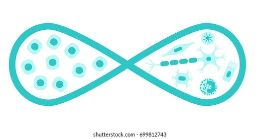 Regenerative medicine concept. Stock vector illustration of an infinity loop with stem cells on one side and different types of human cells that develop from them on the other.