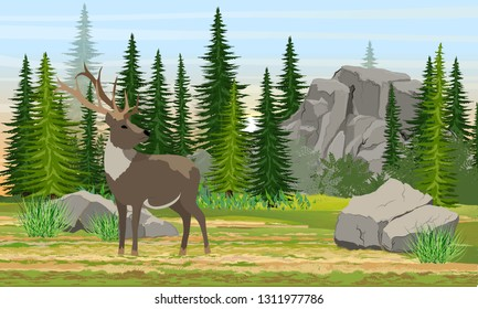 Reindeer with branched horns in the meadow. Mountains and high Canadian fir trees. Wild animals of Europe, USA, Scandinavia and Canada. Realistic Vector Landscape