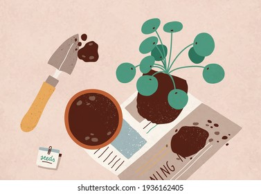 Replanting of Pilea Peperomioides into pot with soil. House plant transplanting. Home gardening and horticulture. Colored flat vector illustration of houseplant removing or transferring