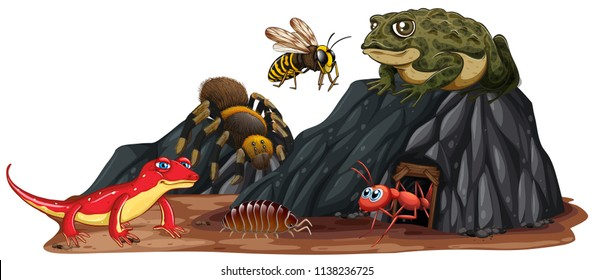 Reptile and insect in nature illustration
