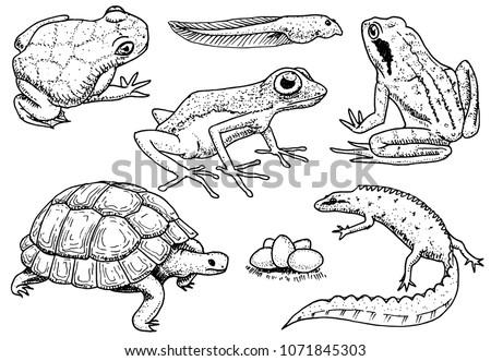 Reptiles Amphibians Set Pet Tropical Animals Stock Vector (Royalty ...