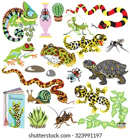 reptiles set , amphibians and insects , isolated cartoon terrarium animals