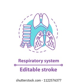 Respiratory system anatomy concept icon. Pulmonology idea thin line illustration. Healthcare. Human lungs, trachea, diaphragm. Vector isolated outline drawing. Editable stroke