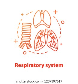 Respiratory system anatomy concept icon. Pulmonology idea thin line illustration. Healthcare. Human lungs, trachea, diaphragm. Vector isolated outline drawing