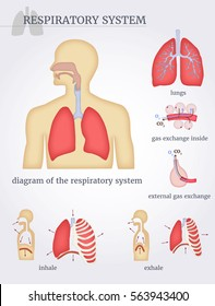 Respiratory system: diagram of the respiratory system with lungs, inside gas exchange, external gas exchange, inhale and exhale. On a white background. Vector