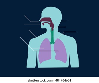 Respiratory system of human editorial vector