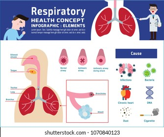 Respiratory system of human. illustration about anatomy and physiology. infographic disease medical banner header healthcare concept. Vector icon flat cartoon design Isolated on white background.