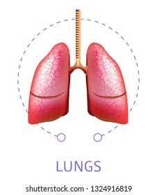 Respiratory system human lungs internal organ isolated icon vector anatomy breathing oxygen circulation medicine and healthcare organism anatomical structure pulmonary trachea and bronchi treatment