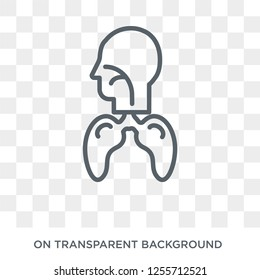 Respiratory System icon. Trendy flat vector Respiratory System icon on transparent background from Human Body Parts collection. High quality filled Respiratory System symbol use for web and mobile