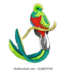 the resplendent quetzal bird male  vector illustration