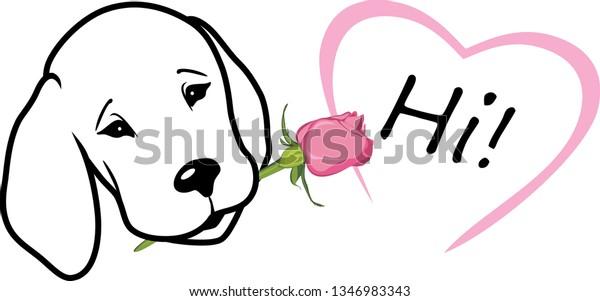 retriever-gives-rose-says-hi-600w-134698