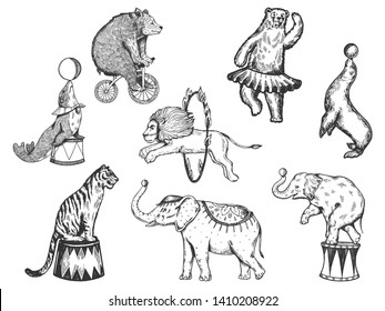 Retro circus animals performance set r sketch vector illustration. Old hand drawn engraving imitation. Human and animals vintage drawings