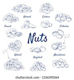 Retro doodle set of Nuts - Food, Almond, Cashew, Pistachio, Macadamia, Hazelnut, Walnut, Peanut, Snack, healthy, hand-drawn. Vector sketch illustration isolated over white background.