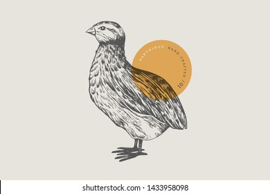 Retro engraving quail. Hand-drawn picture with a poultry. Can be used for menu restaurants, for packaging in markets and shops. Vector vintage illustrations.