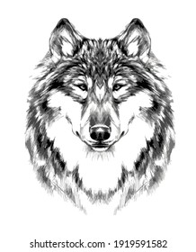 Retro Hipster animal wolf. Hand drawing wolf head. tattoo, t-shirt, poster, painting