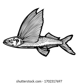 Retro vector illustration vintage drawing of an oceanic flying fish