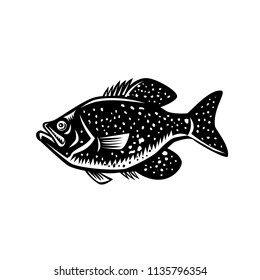 Retro woodcut style illustration of a  crappie fish, papermouths, strawberry bass, speckled bass, specks, speckled perch, crappie bass, calico bass, a North American fresh water fish viewed from side.