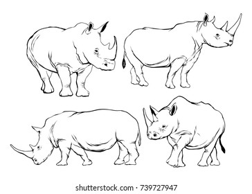 rhino illustration in line drawing