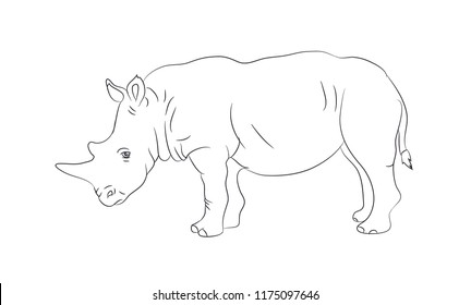 rhinoceros worth drawing lines, vector, white background