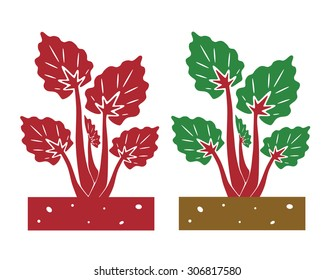 rhubarb plant,vector illustration